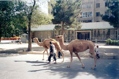 Central-Kabul.jpg