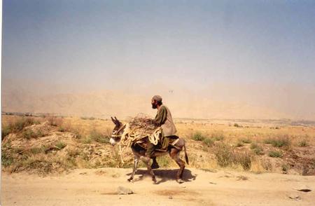Man-on-donkey.jpg